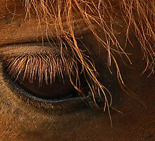 Eye Of Equus by sundawg7