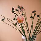 spring - ing by narelle sartain
