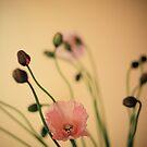 poppy. by narelle sartain