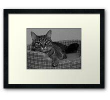 Miss Gracie Framed Print