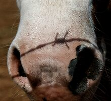 Barbed wire nose by Erika Gouws