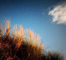 Grass (with cloud) by PaulBradley