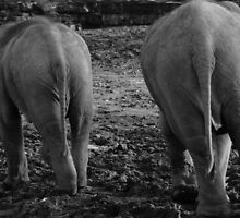 Does My Bum Look Big In This! by Franco De Luca Calce