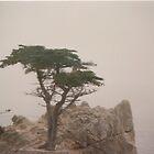 Lonesome Cypress by dbronco928