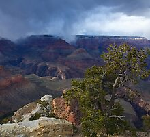 Storm Over South Rim by Dick Paige