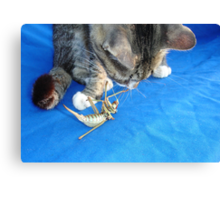 Young Male Tabby Cat Playing With It's Prey Canvas Print