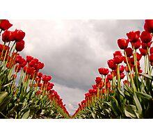 Tulip Heaven Photographic Print