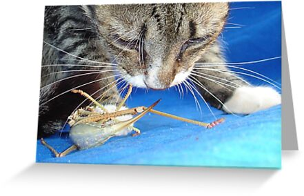 Close Up of A Tabby Cat and Katydid by taiche