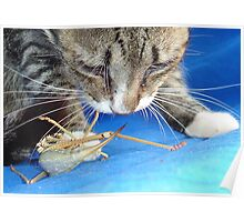 Close Up of A Tabby Cat and Katydid Poster