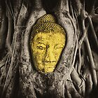 Buddha In Roots by nicholaspr