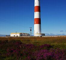 Tarbat Ness Lighthouse Heather by Richard Hanley www.scotland-postcards.com