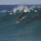 SURFING DOLPHINS by smico