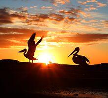 Sunrise Pelicans by Philip Alexander