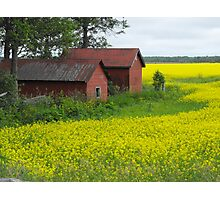 Red Sheds, Yellow Fields Photographic Print