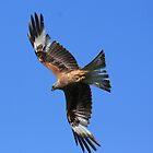 flying high by springbob