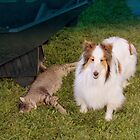 ARLEN  THE  CAT  AND  REX THE SHELTIE by 3DOGNIGHT