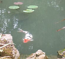 Fish pond at Blenheim palace by leelee