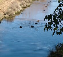 Sitting Ducks by Gary Kelly