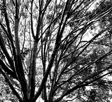 Study in Light and Shadow: Branches, Sky, and Foliage in Black and White #1 by Ivana Redwine