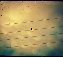 Like a bird on a wire... by Marc Loret