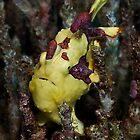 Frogfish by Marcel Botman