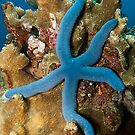 Blue Starfish by Marcel Botman