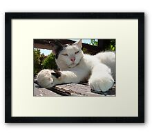 Black and White Bicolor Cat Lounging on A Park Bench Framed Print