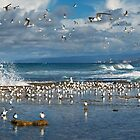 &quot;Point Roadknight&#x27;s Crested Terns&quot;,Anglesea,Great Ocean Road,Australia. by Darryl Fowler