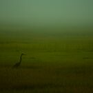 Great Blue Heron by chazz