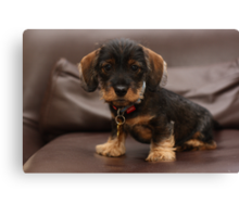 I'm too cute for this chair Canvas Print