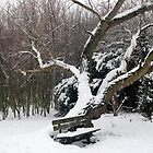 Snowcovered seat, Grays, Essex, Winter 2009 by Anita52