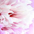 Baby Pink by Leslie van de Ligt
