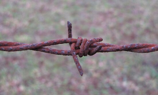 Barbed Wire by Maree Cardinale