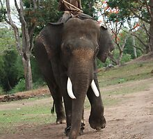 Elephant Out On A Walk by Indrani Ghose
