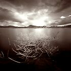 Lake Moogerah by Sue Hammond