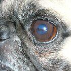 thru a pugs eyes by ChaosRain