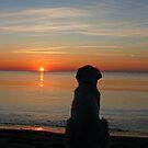 My Golden Retriever Ditte enjoys the sunset by Trine