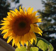 SUNNY DAYS by tkrosevear