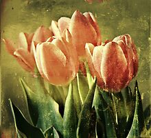Tulips by Caterpillar