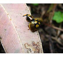 Ladybird Liftoff Photographic Print