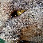 Cat by goldrose