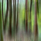Streaky Woods by Mike Freedman