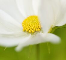 Cosmos Sonata by Mandy Disher