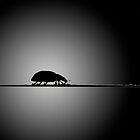 Lady Bug by psnoonan