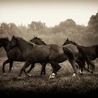 The Herd by Heather Last