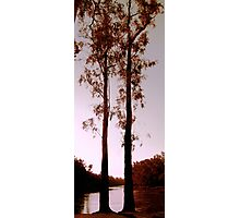Two Souls - Trees on River Murray Photographic Print
