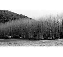 Winter's Day - Colo 1 Photographic Print