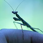 Praying Mantis/ Walking Stick by Jules Campbell