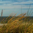 Dune by PhotoAmbiance