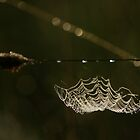 String of Pearls by Martins Blumbergs